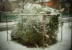 Hová tegyük a leszedett és elszáradt karácsonyfákat?