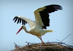 Megkezdődött a Tavaszi madárles program